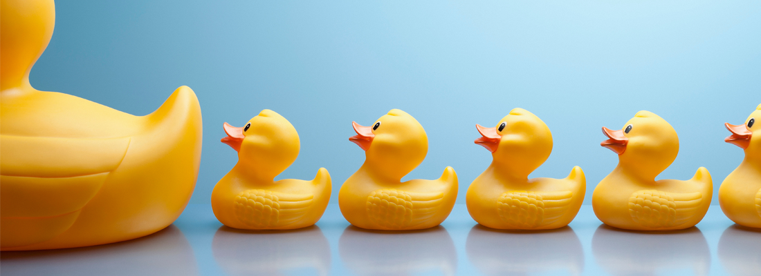 A row of yellow, rubber ducks